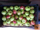 Žganje iz jabolk prodam. Tel 041 641 067