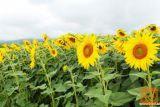 Kmetija, iščemo pomoč na kmetiji, 041 318825