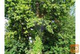 Prodamo 15 Ha Zelo Ohranjenega Mešanega Gozda